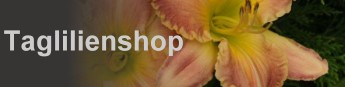 Taglilienshop-Logo